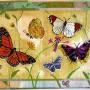 American-Butterflies_l.jpg