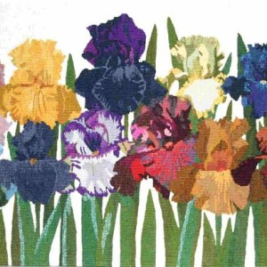Colourful-Irises_l.jpg